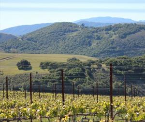 Vineyard / Hills